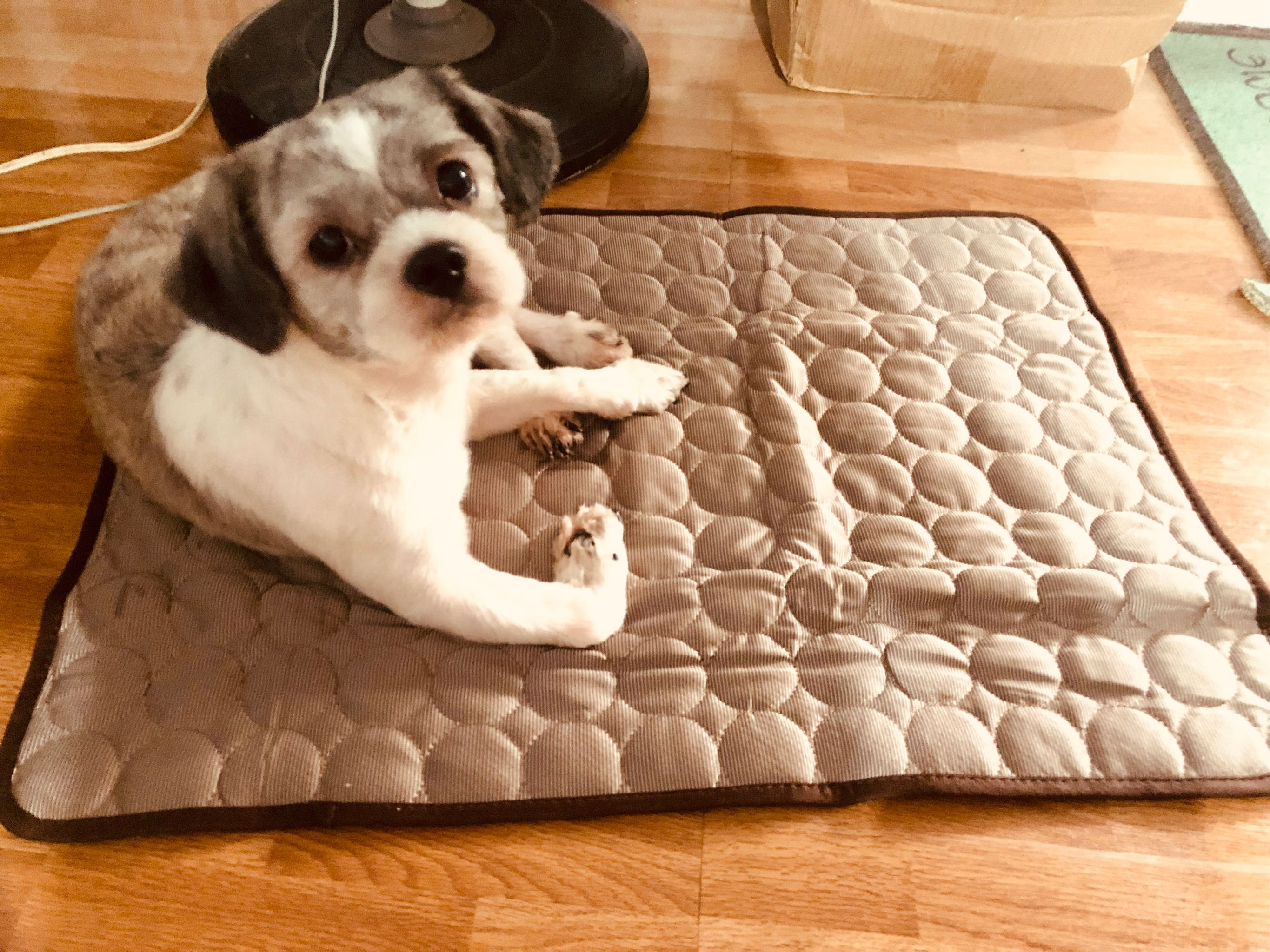 Summer Pet Cooling Ice Mat Portable Travel Cat Puppy Dog Sleeping Blanket Mattress Sofa Cushion for Kennel Bed Cage