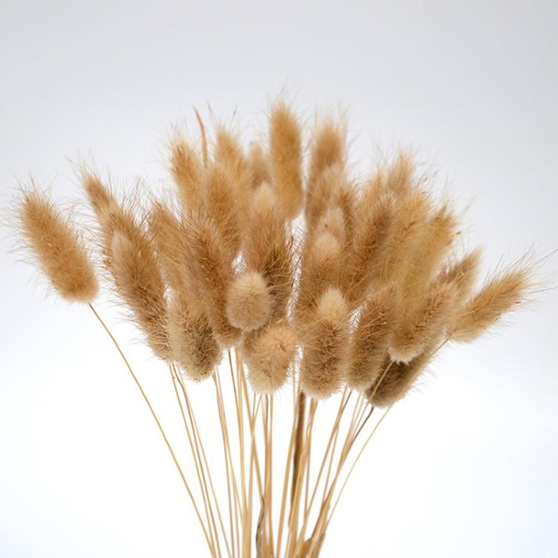 20 Stems Dried Flower Bunny Tail Natural Plants Floral Rabbit Grass Bouquet Home Decoration Accessories Photo