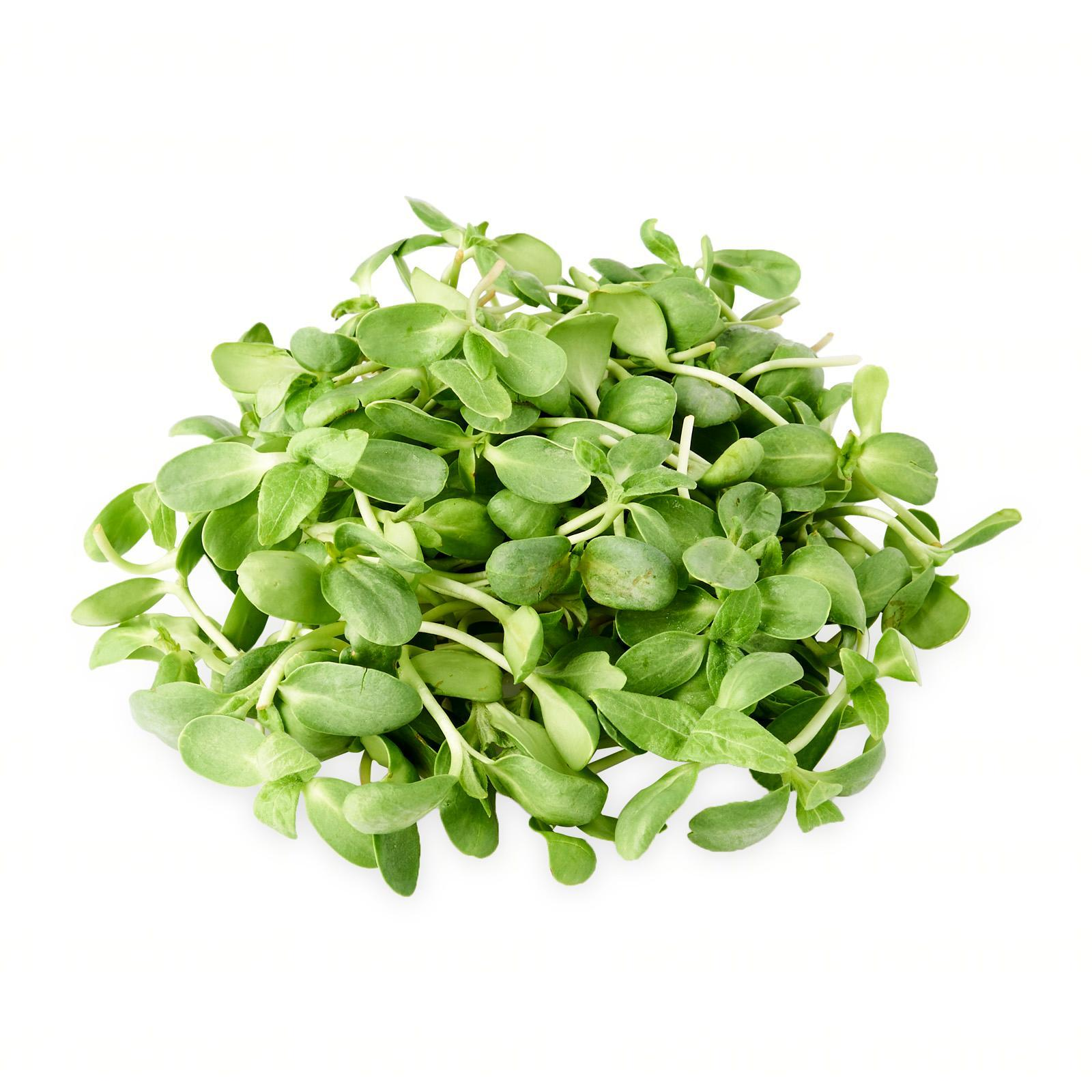 The Little Red Farm Sunflower Sprouts