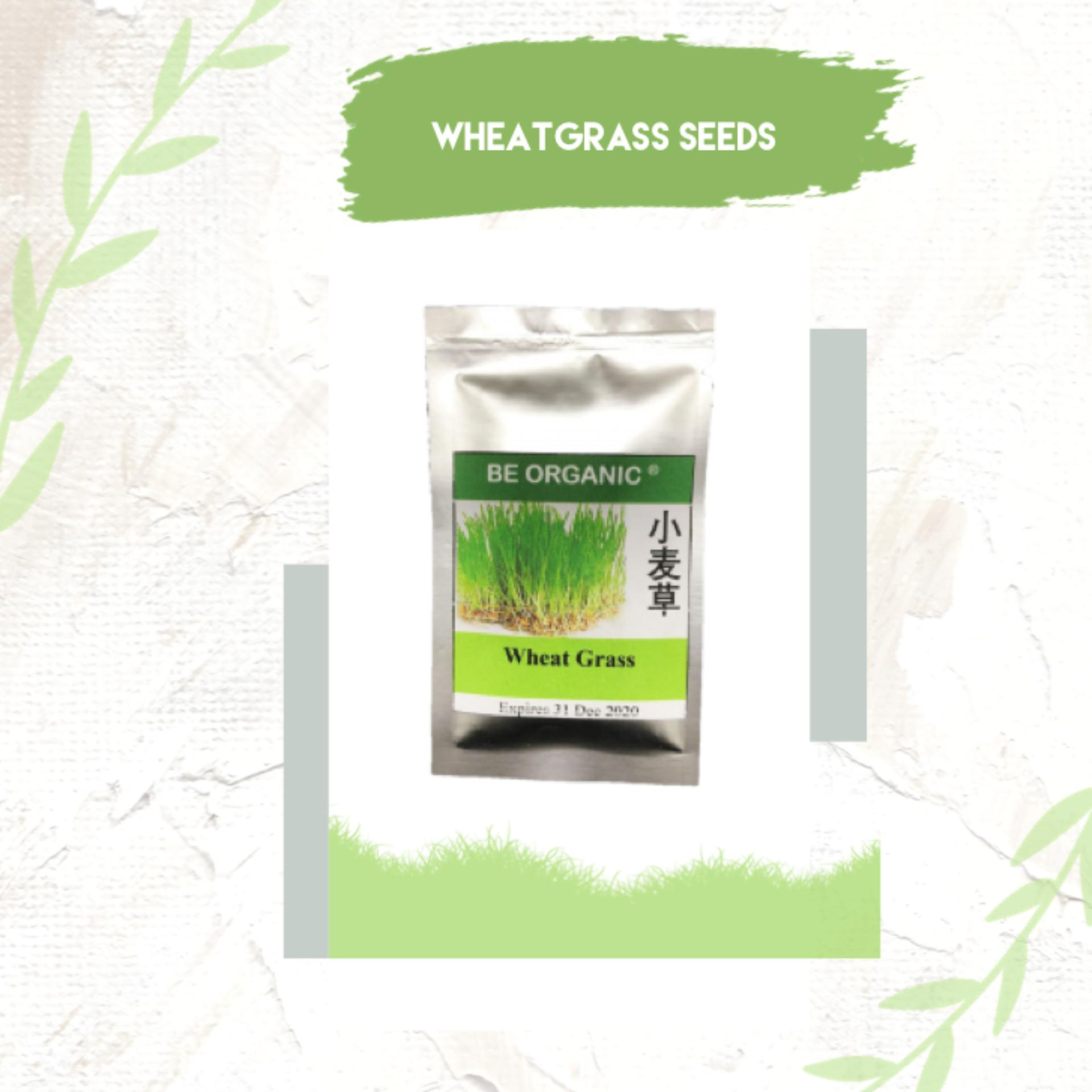 Wheat Grass Microgreen Wheatgrass Seeds
