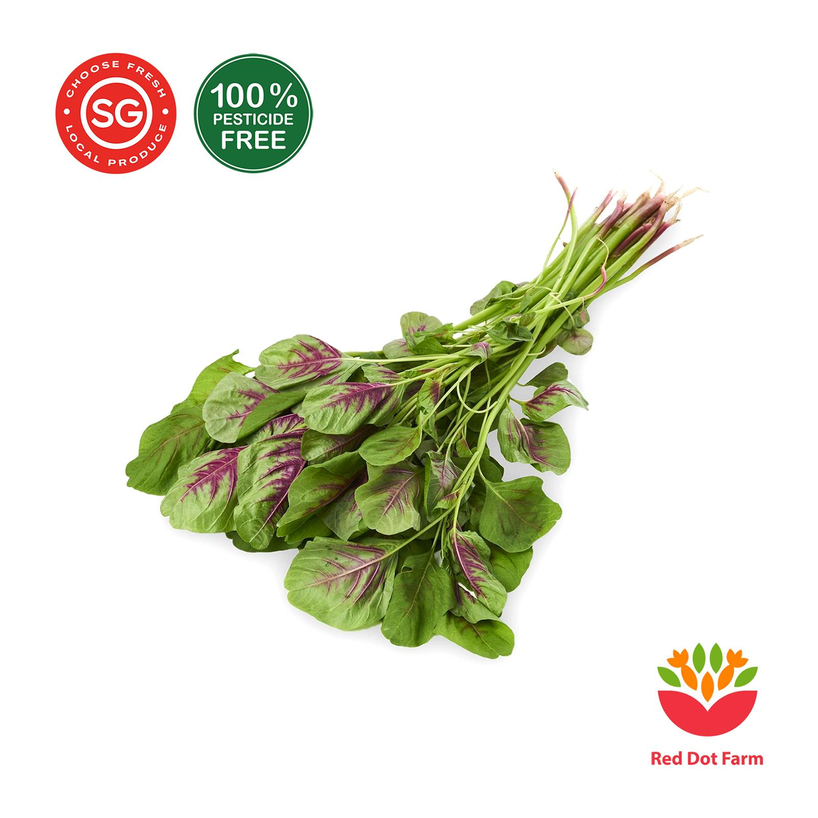 Red Dot Farm Red Bayam Spinach