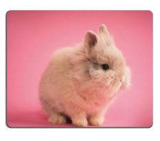 ELong station sold Natural Rubber Mouse Pad Cute little bunny on pink background M0A11025 - intl