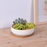 Discount 1 Set Minimalist White Ceramic Succulent Plant Pot Porcelain Planter Decorative Desktop Flower Pot Home Decor Intl Oem