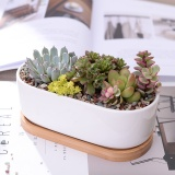 Retail Price 1 Set Minimalist White Ceramic Succulent Plant Pot Porcelain Planter Decorative Desktop Flower Pot Home Decor Intl