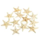 Who Sells 12Pcs White 2 3 Bleached Knobby Starfish Wedding Display Beach Sea Shell Craft Intl Cheap