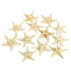 Price Comparison For 12Pcs White 2 3 Bleached Knobby Starfish Wedding Display Beach Sea Shell Craft Intl
