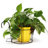 Buy 5Pcs Metal Iron Flower Pot Hanging Balcony Garden Plant Planter Home Decor Basket Black Intl Cheap On China