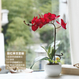Latest And Home Decoration Bathroom Flower Decorative Flower Butterfly Orchid