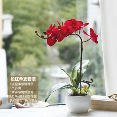 Best Rated And Home Decoration Bathroom Flower Decorative Flower Butterfly Orchid