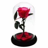Beauty And The Beast Enchanted Rose Fairy Tale Belle Glass Prop Decor Gift New Intl For Sale