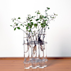 Clear 6 Tubes Shape Flower Glass Vase Fish Tank ation