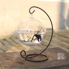 Sale Fish Tank Mini Fish Tank Hydroponic Bottle Metal Frame Oem On China