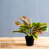 Buying Creative Nordic Large Simulation Plants Potted Ornaments Living Room Snnei Decorative Floor Plant Fake Bonsai Furnishings