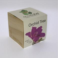Buy Feel Green Ecocube Special Orchid Feel Green