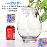 Compare Prices For Lucky Bamboo Water For Plant Container Pots Vase