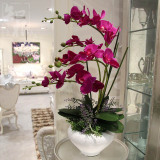 Known Root High Potted Living Room Butterfly Orchid Suit Furnishings Vase Price Comparison