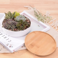 Review Minimalist White Ceramic Flowerpot Succulent Plant Pot Bonsai Planter Porcelain Pot 1 Pot 1 Bamboo Stand Intl On China