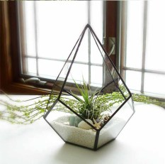 Top 10 Glasshouse Glass Planter For Succulent Plants