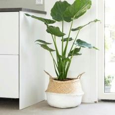 MU Seagrass Belly Storage Basket Shopping Bag Box Organizer Plant Pothalf White - intl