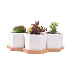 How Do I Get My Decor 4Pcs White Ceramic Hexagon Succulent Cactus Plant Pot With Bamboo Tray Intl
