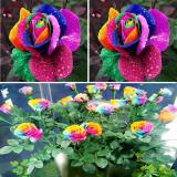New Beautiful 500Pcs Colorful Rainbow Rose Flower Seeds Yard Garden Decor Shopping