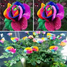 New Beautiful 500Pcs Colorful Rainbow Rose Flower Seeds Yard Garden Decor Compare Prices
