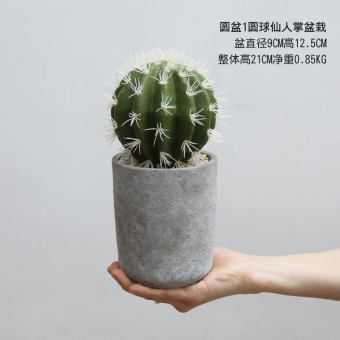 Review New Style Model Succulent Cactus On China