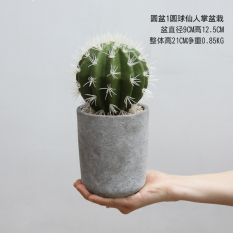 Buy New Style Model Succulent Cactus Cheap On China