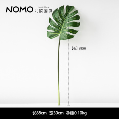 Review Country Monstera Model Monstera Plants Oem On China