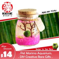 Pet Marimo Aquarium Starter Pack Rare Japan Fur Ball Lucky Gifts Birthday Anniversary Farewell Friends Him