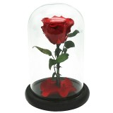 Buy Preserved Flower Unwithered Eternal Rose With Glass Cover And Packing Box For Valentine Gift Intl Cheap China