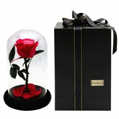 Discount Rose Flower Festive Preserved Forever Immortal Fresh Rose Immortalized Glass Cover Unique Love Gifts Home Decor Red Intl