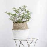Seagrass Flowers Belly Basket Storage Plant Pot Laundry Fruits Bags Foldable 32X28Cm Intl Shopping