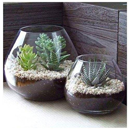 Set of 2 Decorative Modern Round Clear Glass Display Vases Bowl Candleholders Air Plant Terrarium Cups - intl