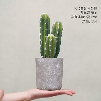 Discount Home Living Room Tv Cabinet Fake Cactus Decoration Bonsai China
