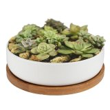 Price Succulent Planter Ceramic With Bamboo Tray 6 Inch Modern White Ceramic Round Design For Succulent Planter Cactus Pots Decorative Flower Holder Bowl Basin Intl China