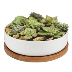 Get Cheap Succulent Planter Ceramic With Bamboo Tray 6 Inch Modern White Ceramic Round Design For Succulent Planter Cactus Pots Decorative Flower Holder Bowl Basin Intl