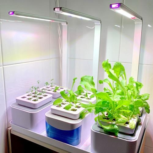 Smart Garden Indoor Hydroponic Mini Herbs Garden Kit with LED Grow Light (Comes with 1 complimentary lettuce seed and 25ml fertilizer so you can start growing now.)