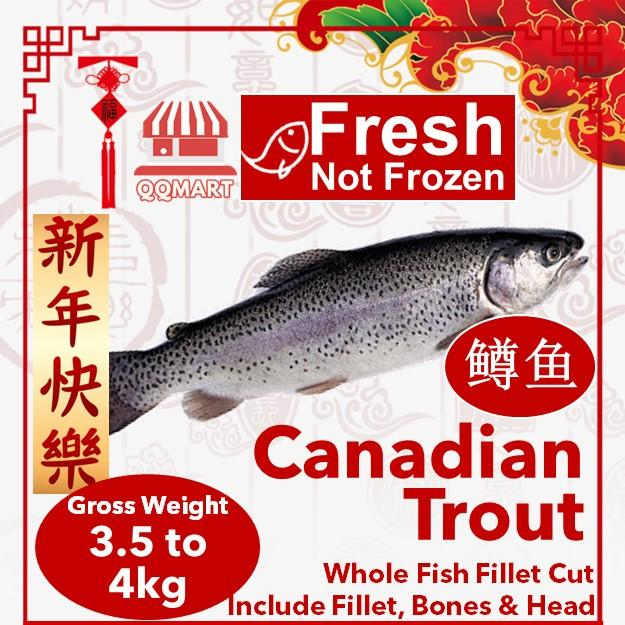 Fresh Whole Canadian Trout 3.5 To 4kg (fillet Cut) By Qqmart.