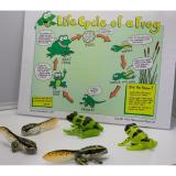 Frog Life Cycle Figurines On Singapore