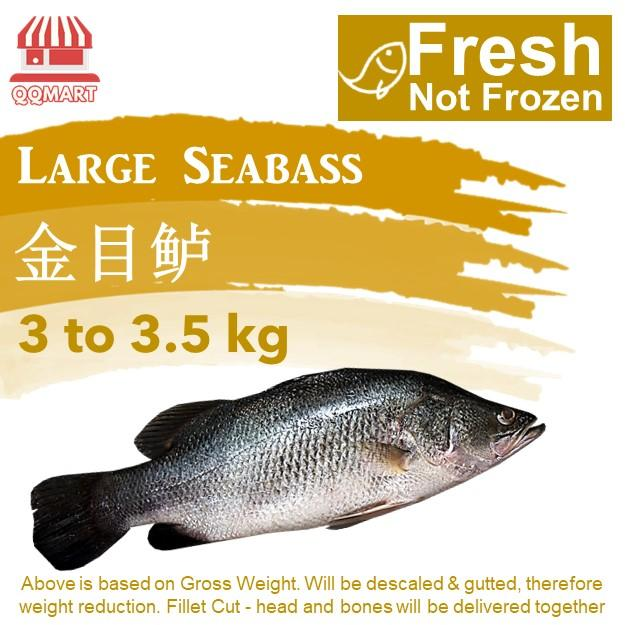 Fresh Whole Large Seabass 3 To 3.5kg (fillet Cut) By Qqmart.