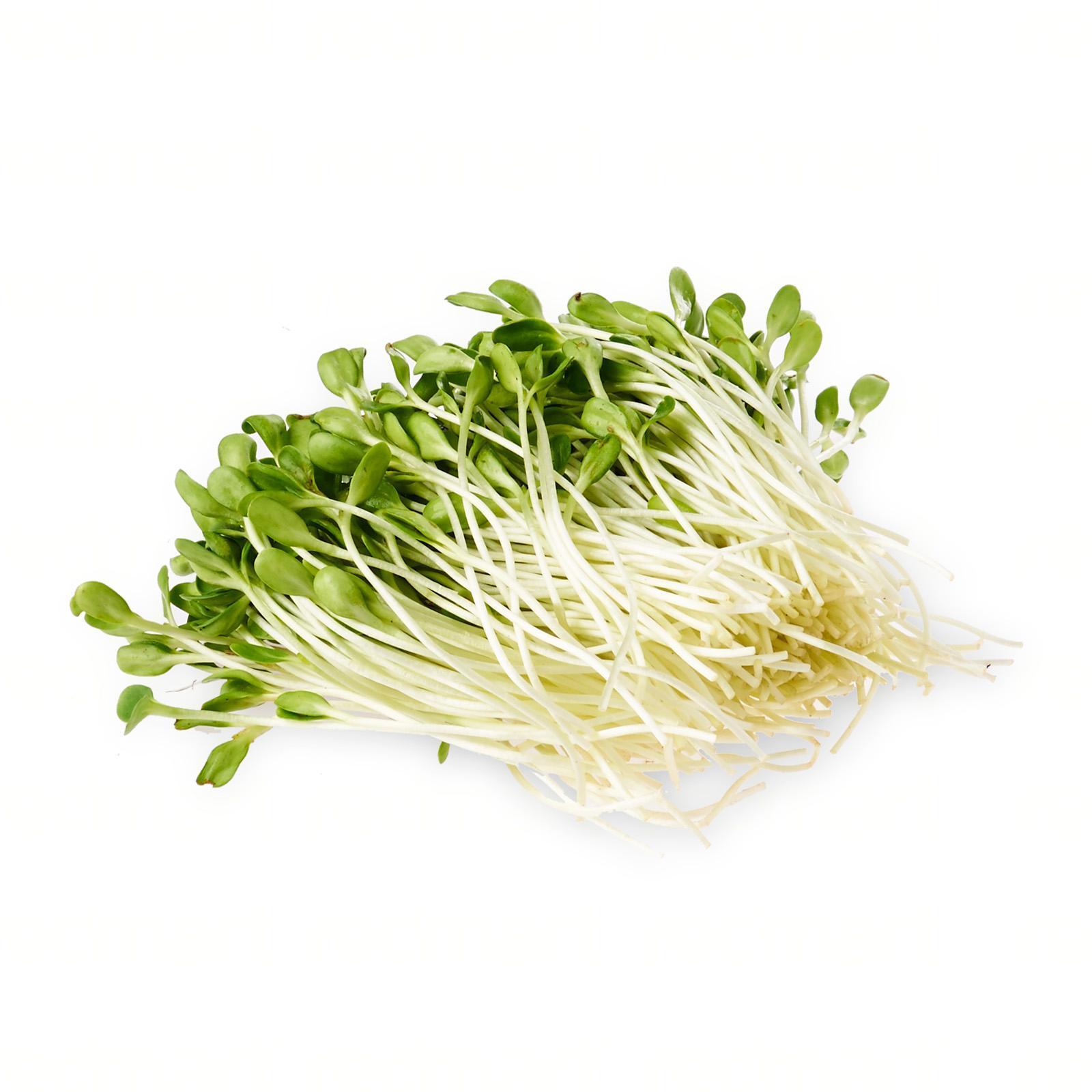 Quan Fa Organic Farm Organic Sunflower Sprouts