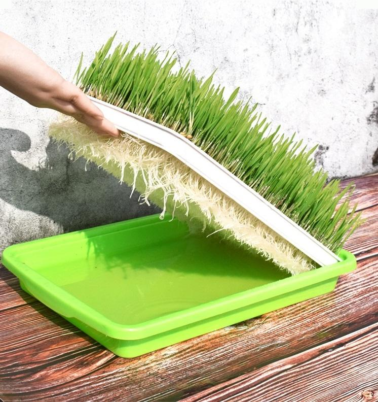 Auskie Cat Grass Diy Kit By Apetmart.
