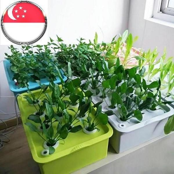 【Free Shipping + Super Deal + Limited Offer】11 Holes Hydroponic Plant kit Hydroponic System Grow Kit Indoor Garden Box with 220-240V Air Pump. (Comes with 1complimentary lettuce seed and 120ml fertilizer A and B so you can start growing now.)