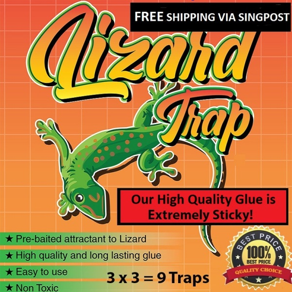 Lizard Trap / Gecko Sticky Trap with Pre-baited Glue (9 traps/pack)