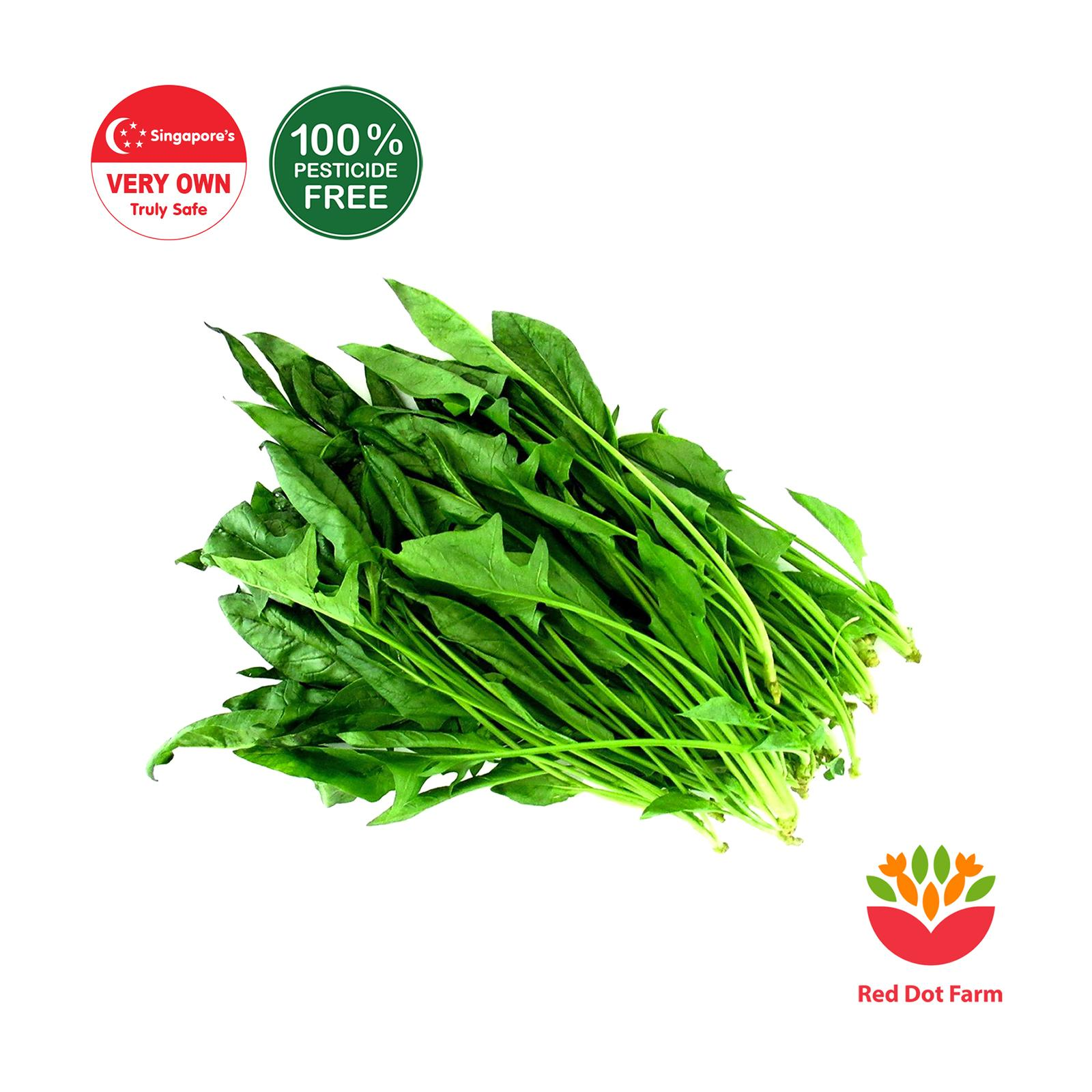 Red Dot Farm Chinese Spinach