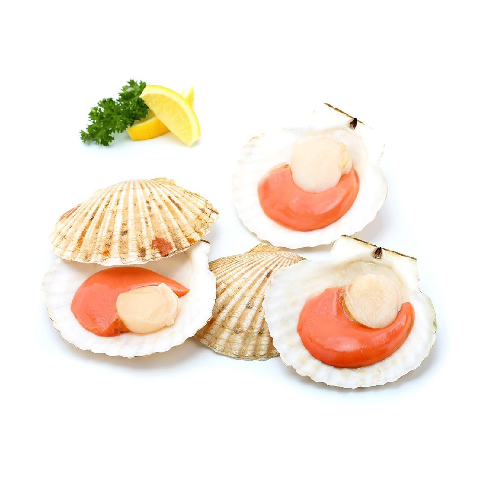 Catch Seafood 1/2 Shell Scallop With Shell (12 Piece+-) - Frozen