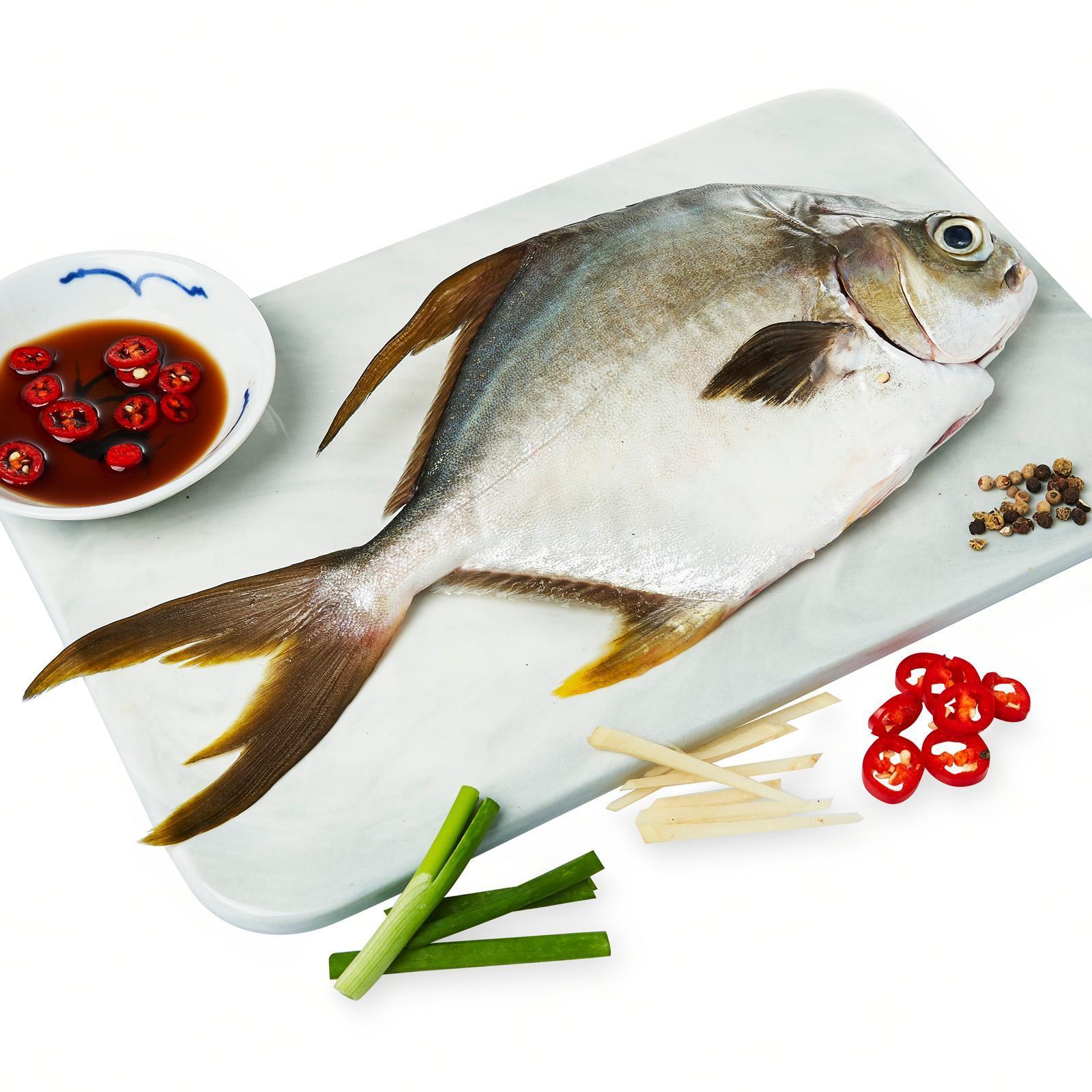 The Fish Farmer Golden Pomfret