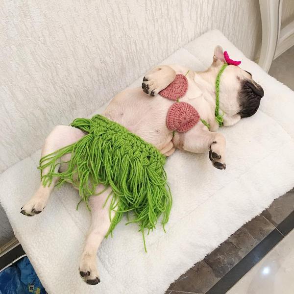 Váy Cỏ Bikini Thú Cưng Vui Nhộn, Cosplay Trang Phục Đạo Cụ Chụp Ảnh Cho Chó, Trang Phục Hóa Trang Chó Corgi Kiểu Pháp Con Chó Nhỏ