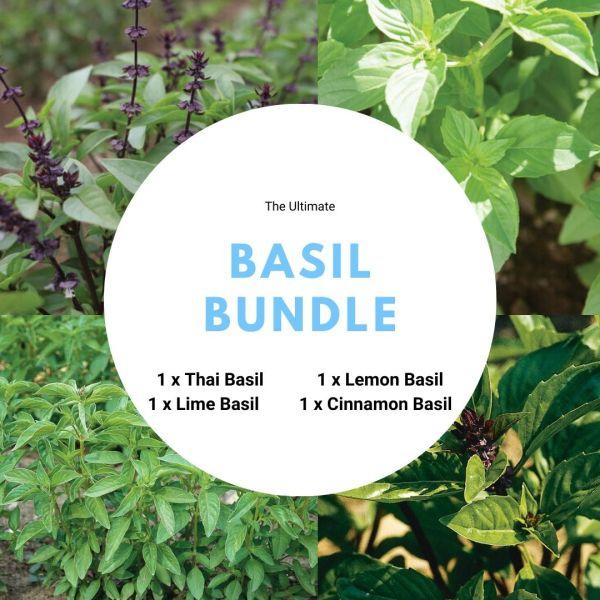 [BUNDLE MIX]  Basil seed (4 Packets) - GreenSpade's Choice